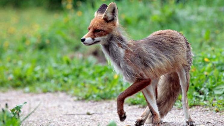 Συνέδριο για  νοσήματα άγριων ζώων στη Λάρισα