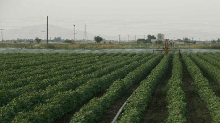 Eως σήμερα οι δηλώσεις ΦΠΑ για αγρότες