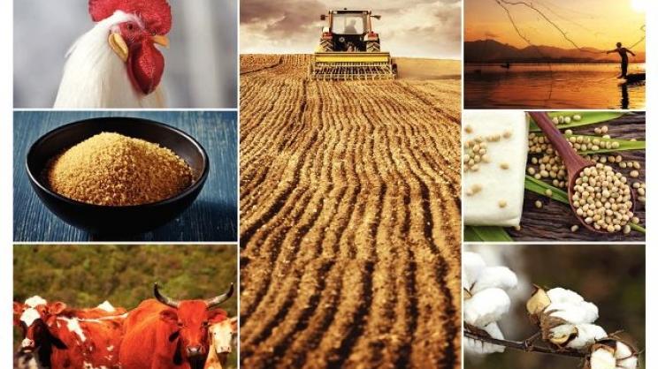 Ποιες καλλιέργειες υπόσχονται εισόδημα στους αγρότες την επόμενη δεκαετία