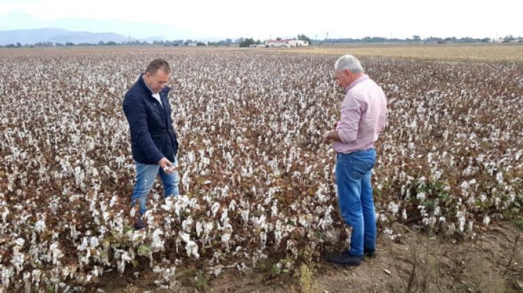Σε καλλιέργειες βαμβακιού στη Φαλάνη ο κ. Κόκκαλης